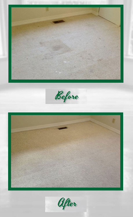 Premium Carpet Cleaning In Kirkland Wa Green Steam