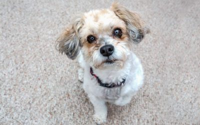 3 Ways To Remove Pet Urine Stains and Smells From Carpet